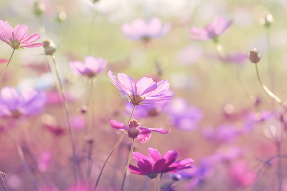 Image of wild flowers in the breeze